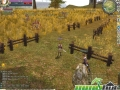 thumbs rohan online farm
