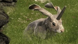 theHunter: Non-Typical Rabbit Release Video Thumbnail