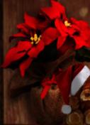 Webzen Celebrates the Holiday Season