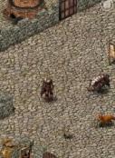 MMOHuts_ Wild Terra major Update 8.37. - Main Thumbnail